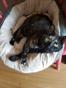Cat sitter needed for lovely indoor cat - July 17-Aug. 17