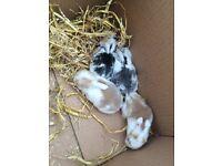 Baby rabbits!