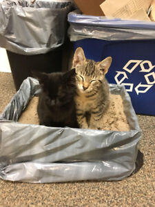 FOUND KITTENS, near county road 18 in Prince Edward County