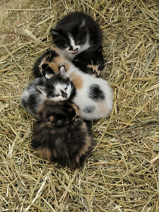 Free Kittens for Rehoming