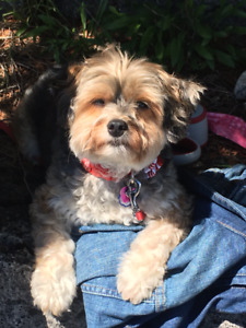 Dog sitting/ Dog Boarding in my home (East of Toronto) $ 25 day
