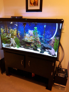 55 gallon aquarium. Comes with everything  fluval g6  led light