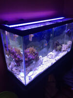 Complete 40 Gallon Saltwater Tank and Accessories