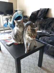 2 adult cats. Free