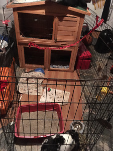 1 year old male rabbit, cage, play pen, food etc