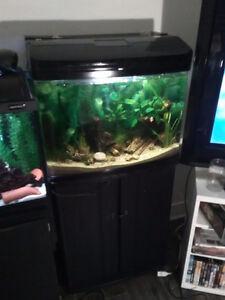 Aquarium tout équiper