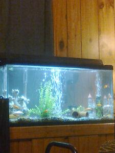 Fish tanks London Ontario image 1