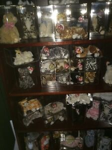 Beanie Baby Cat Collection