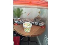 Fish tank, stand, fish and extras