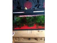 Fish tank and table 75 pound