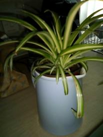 Plant in jug