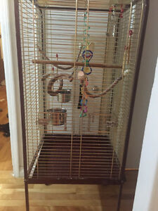 Quaker Parrot and Cage