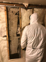 Gta Mold Removal call (416) 551-8287