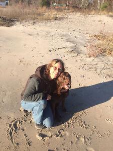 North Simcoe, overnight dog/small farm care.