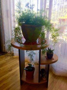 Plante à vendre
