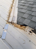 Are you looking for roofing repairs???