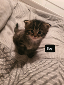 Kittens - Please read description.