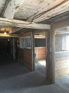 Indoor and outdoor horse board located minutes from Peterborough Peterborough Peterborough Area image 3