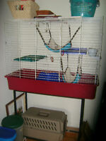 3 ferret hammocks,litter boxes... and all toys 20.00