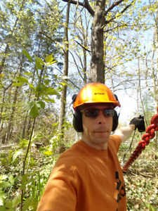 Chainsaw tree pruning removal