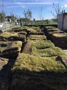 Pallets of bluegrass sod Regina Regina Area image 1