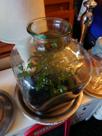 Plant in a bottle for sale