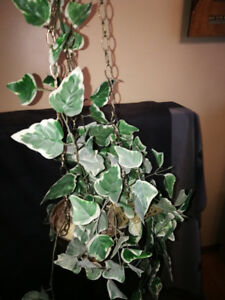 Artificial Plant in Hanging Brass Pot