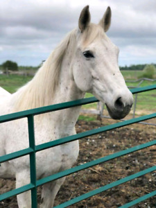 Mare for rehoming
