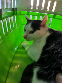 Male Cat Needs a loving home