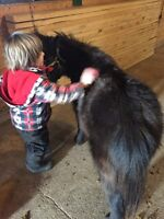 Horse care/grooming lessons