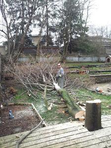 Tree Removal & Log Milling Kitchener / Waterloo Kitchener Area image 4