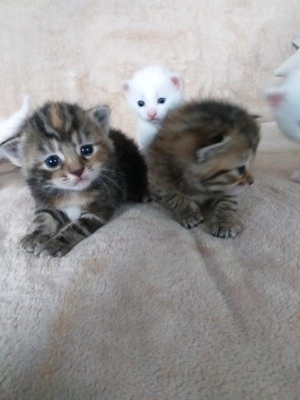 6 Kittens For Sale 3 Girls And 3 Boys In Bridgend Gumtree