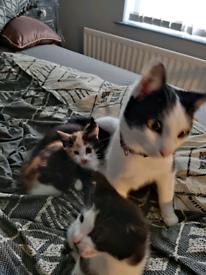 Kittens ready now both female