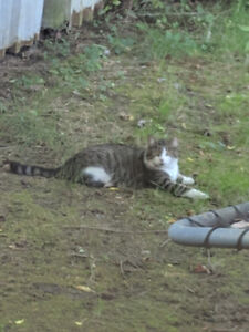 Chat trouve found cat