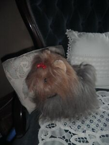 chien peluche yorkshire Gatineau Ottawa / Gatineau Area image 2