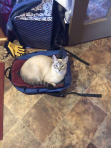 Missing cat south of wood mountain