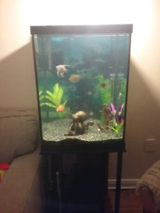 Vertical 40 gallon fish tank with stand