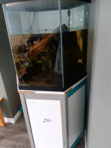 65 gallon Hex tank with Lobster