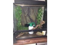 Lizard tank with full set up.