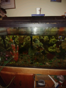 Complete Fish Tank Set Up 50 gallon with fish