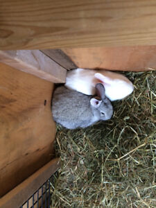 MOTHER BUNNY AND TWO BABY BUNNIES FOR SALE