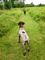 OFF LEASH DOG PARK FOR DOG WALKERS
