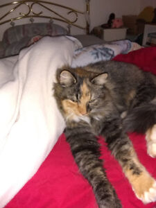 Found - in Riverview -