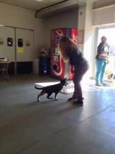 Dog Training - START Obedience Program London Ontario image 2