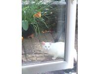 White cat found