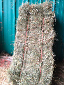 TOP QUALITY HORSE HAY