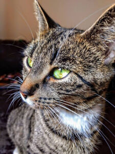 Looking for a loving Home for my Precious cat Lucy!