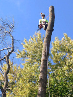 Arborist for Hire, Tree Removal
