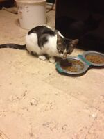 2 male kittens 7 months old free