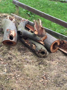 ISO Logs and stumps